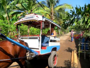 Gili Air horse and cart