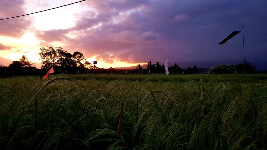 Sunset Bali Silent Retreat Ricefields